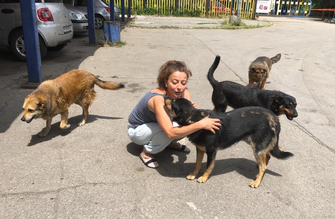 Tireless care for the Kremikovtsi Dogs
