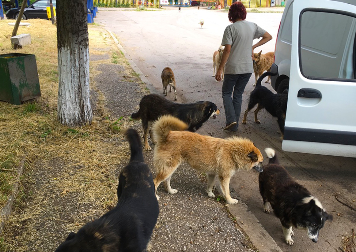 Dana regularly visits and feeds the strays in Kremikovtsi